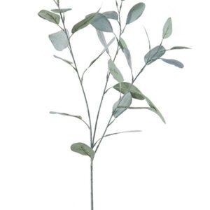 Eucalyptus 80cm