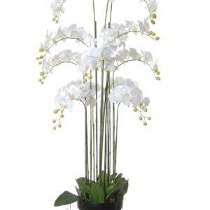 Orchidee x13 in pot, 152cm