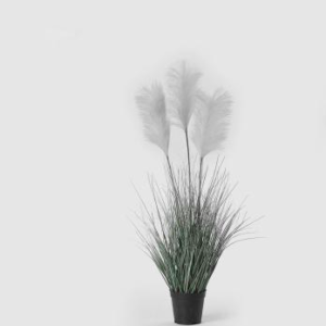 PAMPAS WEST PLANT X3 C / VAAS H CREAMROZE