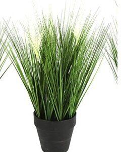 Poaceae medium