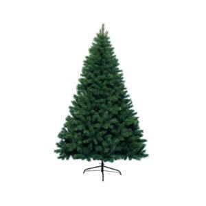 Canada spruce